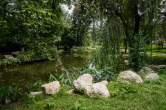 Rocks by pond in flourishing summer Stock Photos