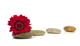 Rocks with red flower Royalty Free Stock Photography