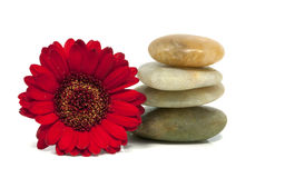 Rocks with red flower Royalty Free Stock Images