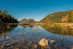 Rocks and Reeds in Jordan Pond. In Acadia in Autumn Royalty Free Stock Photography