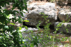 Rocks in the River. Boulders and stones lie in the river Royalty Free Stock Images