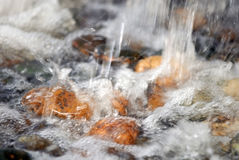Rocks in river rapids. Waves, nature Stock Images