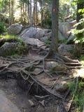 rocks rotar treen Royaltyfri Foto