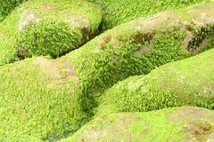 Rocks with salt sediment background Stock Photography
