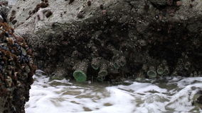 Rocks With Sea Waves Surging Pacifica California stock video