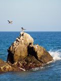 Rocks and seagulls. A picture of seagulls on a rock Royalty Free Stock Images