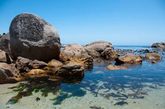 Rocks and Seaweed. Near Camps Bay in Cape Town, South Africa Royalty Free Stock Images