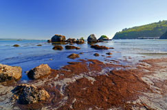 Rocks and Seaweed at Low Tide. Low Tide at Trinidad Bay in California Royalty Free Stock Images