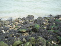Rocks with seaweed Royalty Free Stock Image