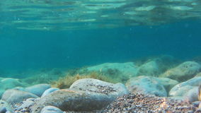Rocks and seaweeds seen from underwater stock video footage