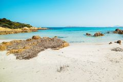 Seaweeds in Spiaggia del Principe. Rocks and seaweeds in Spiaggia del Principe, Sardinia royalty free stock photo