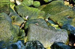 Rocks on the shore Stock Photography