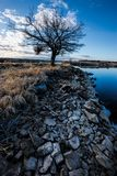 Rocks on the shore lead to tree. Stock Image