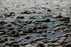 Rocks on the shore Royalty Free Stock Photography