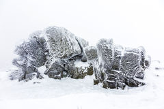Rocks in the  snow in front of a blizzard Stock Photos