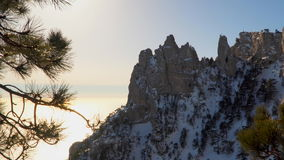 Rocks in snow. Among the rocks grow pine.  stock footage