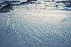 Rocks and snow surface texture with bird traces in evening Stock Photo