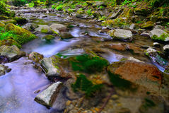 Rocks in the stream Stock Image