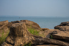 Rocks and stumps Royalty Free Stock Image
