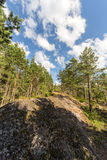 Rocks in a sunny summer forest Stock Images