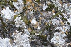 Rocks täckte med mossa och laven Arkivfoto