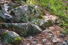 Rocks täckte med mossa och ormbunkar i bergskogarna Royaltyfri Foto