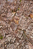 Rocks  texture Stock Photos