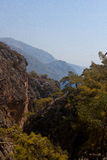 Rocks, tree Sougia, Lissos, Crete Greece Royalty Free Stock Photography