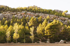 Rocks and trees Royalty Free Stock Images