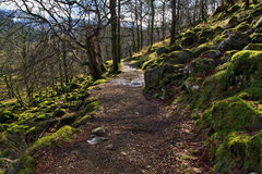 Rocks and trees covered in moss strewn along the Watkins Path Snondon Royalty Free Stock Image