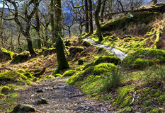 Rocks and trees covered in moss strewn along the Watkins Path Snondon Royalty Free Stock Photo