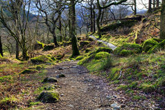 Rocks and trees covered in moss strewn along the Watkins Path Snondon Stock Image