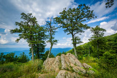 Rocks and trees at Jewell Hollow Overlook in Shenandoah National Royalty Free Stock Images