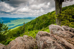 Rocks and trees at Jewell Hollow Overlook in Shenandoah National Royalty Free Stock Photo