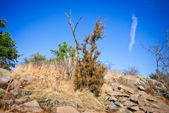 Rocks and trees of an outdoor hike on a clear day stock image