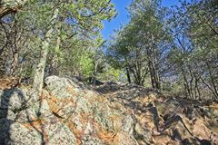 Rocks and trees of an outdoor hike on a clear day royalty free stock photo