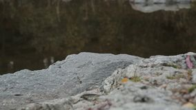 Rocks and trees reflected in water.  stock video footage