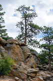 Rocks and trees in the rockies Royalty Free Stock Images