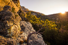 Rocks and Trees at Sunset in the Black Hills of South Dakota Stock Images