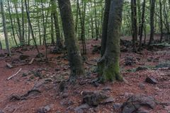 Rocks & trunks in a beech forest stock images