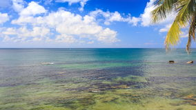 Rocks under Transparent Shallow Water Palm Branch Sky Clouds stock footage