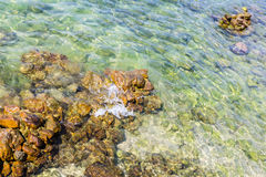 Rocks under water in the sea Royalty Free Stock Photo