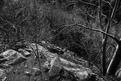 Rocks and Underbrush Stock Photo