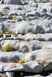 Rocks and vegetation on Doolin beach, county Clare, Ireland Royalty Free Stock Images