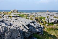 Rocks and vegetation on Doolin beach, county Clare, Ireland Stock Image