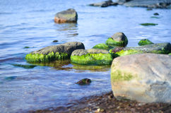 Rocks in water covered with green algae. Rocks in sea water covered with green algae Stock Images
