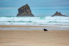 Rocks in the water at Sandfly Bay, Otago Peninsula, South Island, New Zealand.  royalty free stock photography