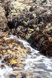 Rocks and waves Royalty Free Stock Photos