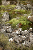 Rocks and wildfowers. Rocks, moss, grass and wildflowers field Stock Photos