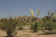 Rocks and Yucca at City of rocks state park. Royalty Free Stock Photos